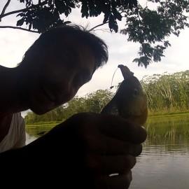 pêche au piranha